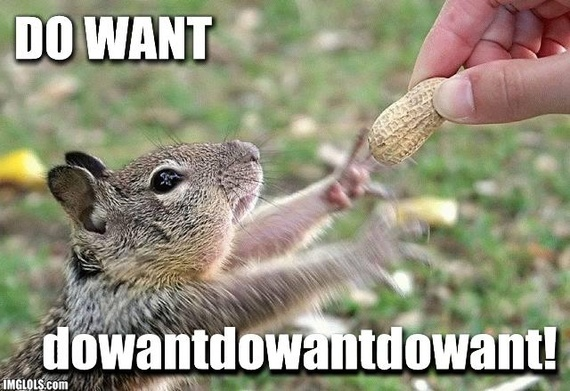 do-want-squirell.jpg